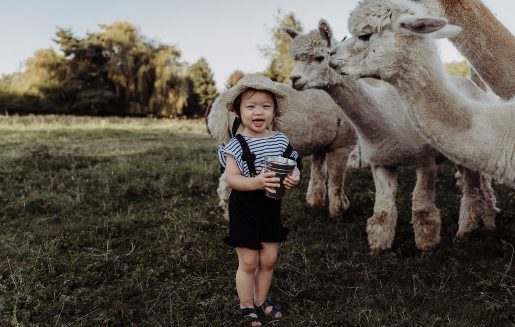 child with Alpaca laughing and feeding